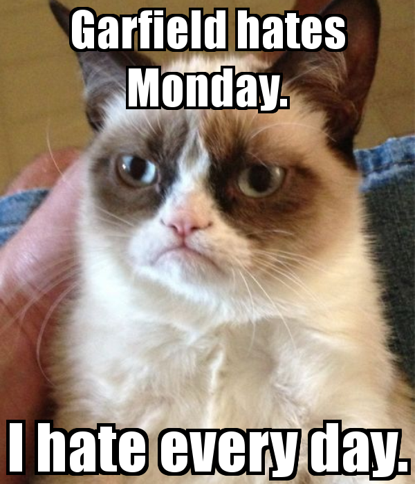 Best of Grumpy Cat's Photo