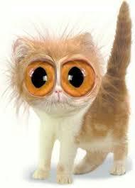 Cute kitty with big eyes!'s Photo