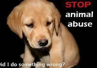 Animal Abuse Needs To STOP!!