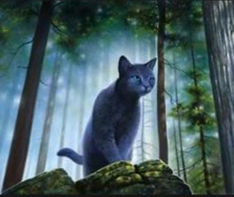 Warrior cats RP!