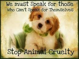 Animal Abuse Needs To STOP!!'s Photo