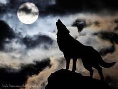 The Night Wolf Pack