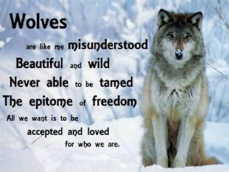 Calling all Wolf Lovers!