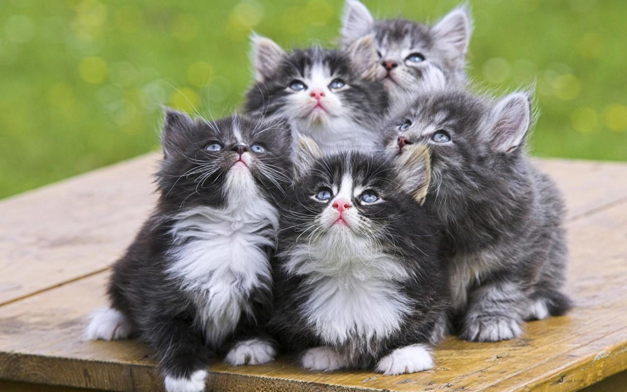 Kitten Lovers!'s Photo