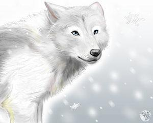 Wolf Rp (1)