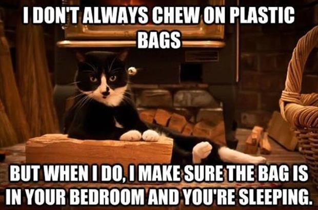 Funny cat and dog memes's Photo