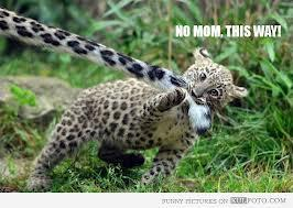 Funny? Leopard?