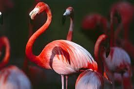Do you like flamingos?