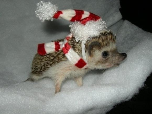 Do you like hedgehogs?