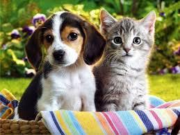 The Ultimate Question: Which is better? Cats or Dogs?!?!