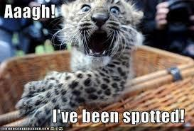 Funny?Leopard?