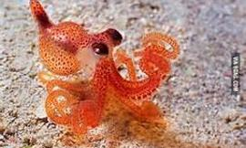 Do You Like Octopuses?