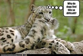 Funny? Leopard? (5)