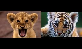Which Animal is cuter?
