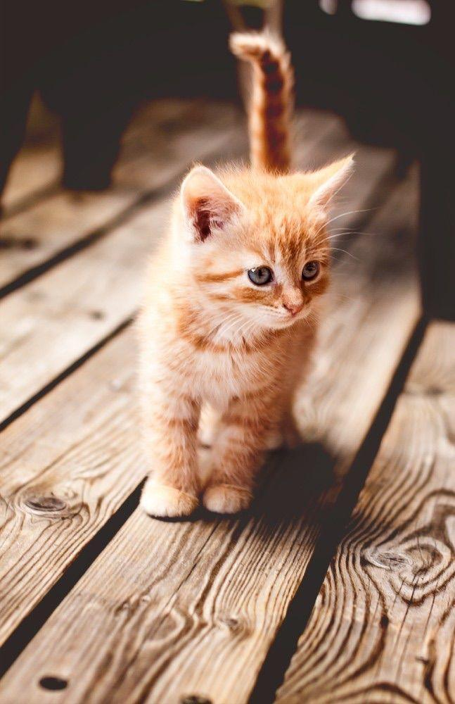 What cat is the cutest?