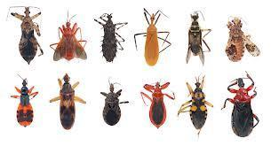 Guess what? An average human accidentally eats 5 pounds of bugs each year!!!