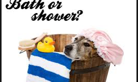Bath or Shower?