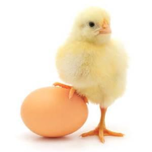 This might be weird but, Which came first, the chicken or the egg?