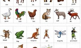 What Is Your Favorite Animal? (5)
