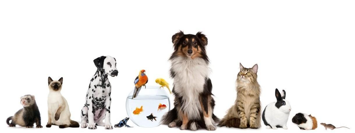 Which pet is best?