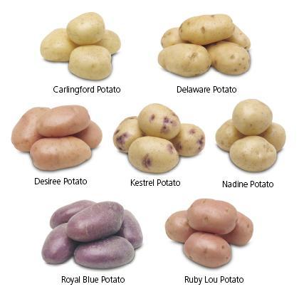 Favorite Type of Potato