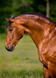 What's your favorite horse coat color?