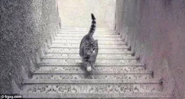 Is this cat walking Upstairs or Downstairs?