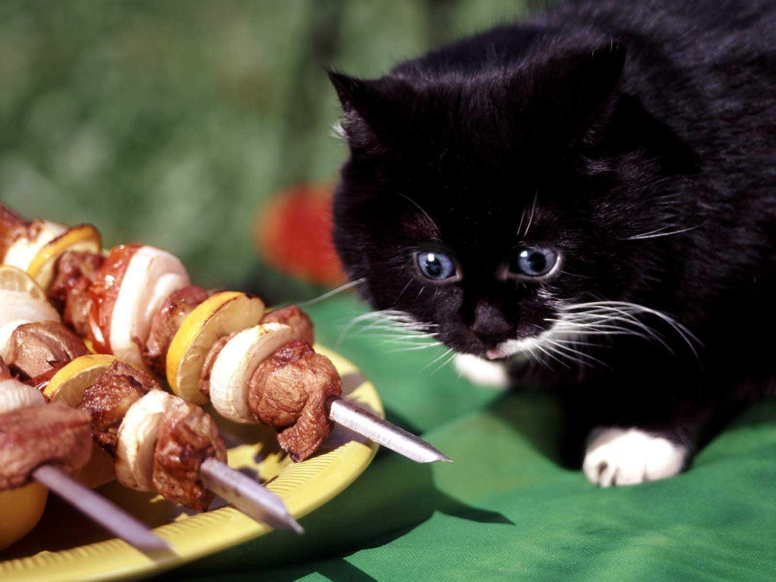 What is your warrior cat's favorite food?