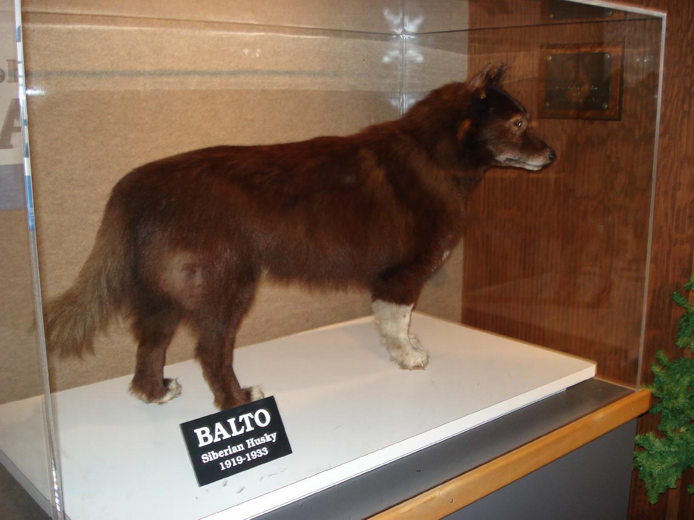 Which Balto movie is your Favorite?