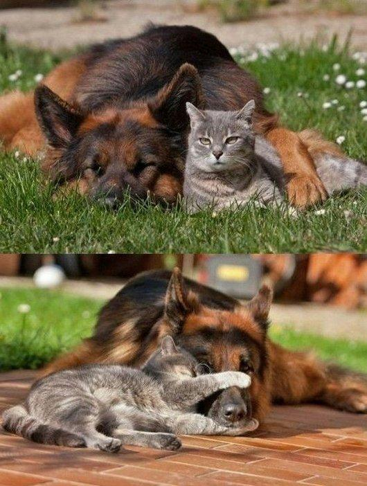 Cats vs Dogs... Which is better?