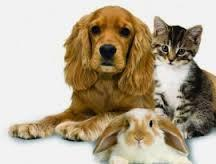 Bunnies, Dogs or Cats?