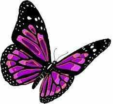 whats your favorite butterfly?