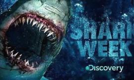 Do You Like Shark Week