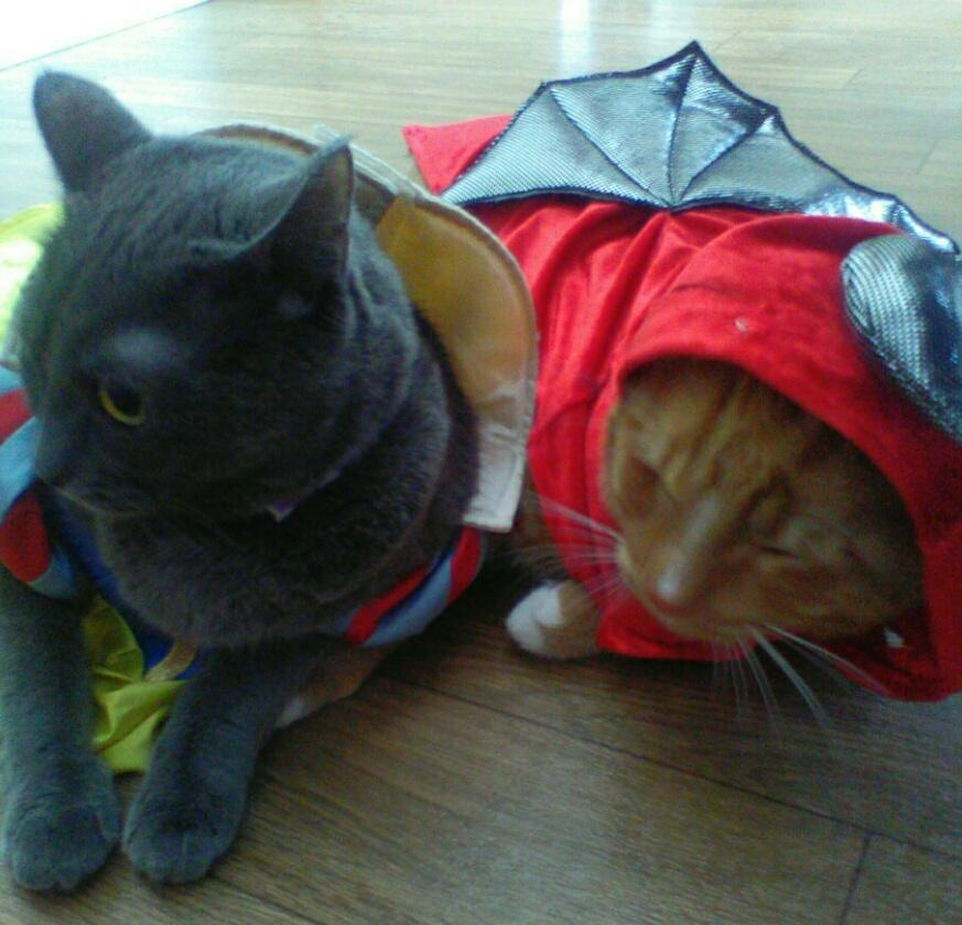 Which cat looks more cuter in their Halloween costume?