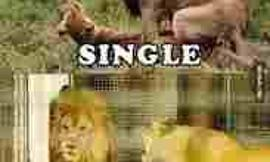 be single or get married?