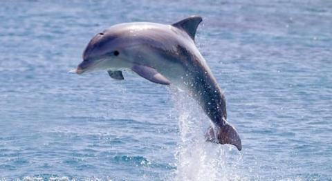 Do you think dolphins are cute?