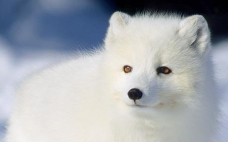 Do You Like Arctic Animals?