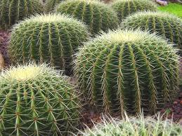 Are u a smooth cactus, or a prickly cactus?