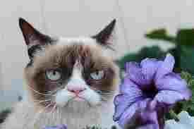funniest grumpy cat quote?