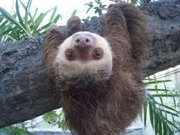 Do you like sloths?