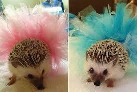 HEDGEHOGS!!!!