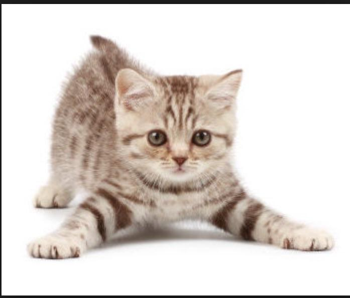 What is the best kitten name (female)?