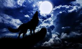 Do you guys like the sound of wolves howling at the moon?