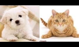 Do you like Dogs more or Cats?