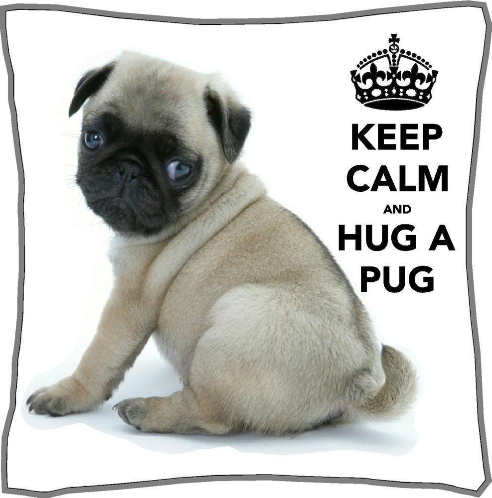 Which Pug Be Cuter?