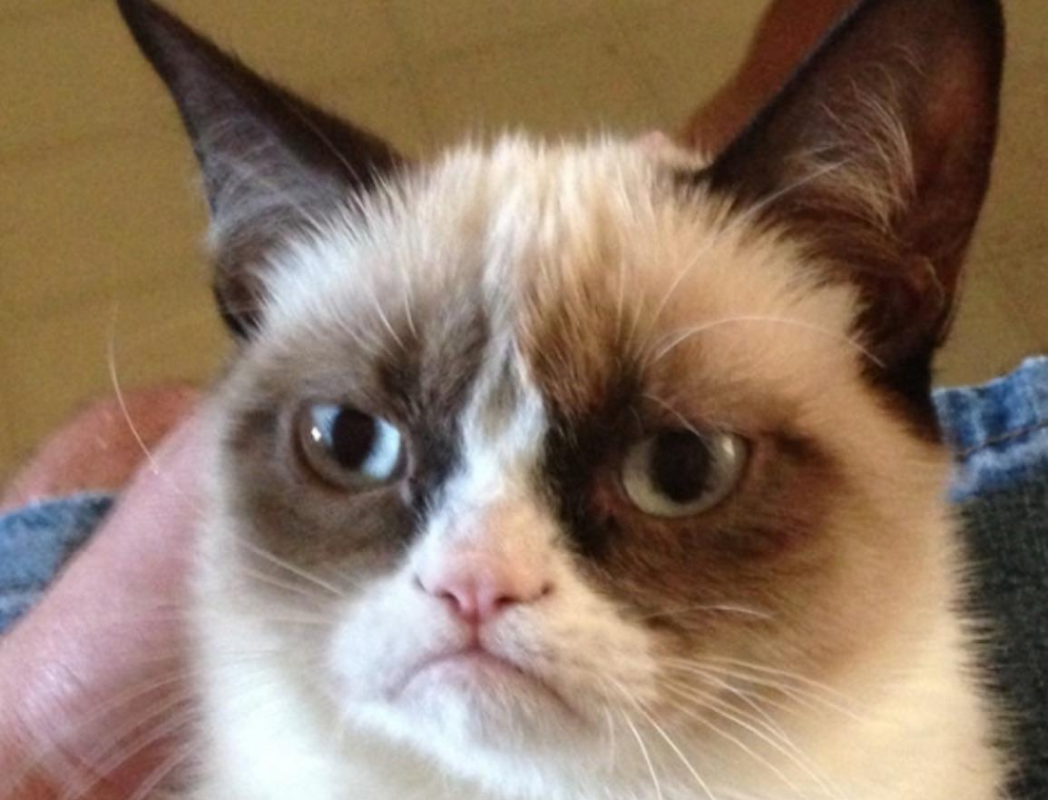 What grumpy cat meme makes you laught more?