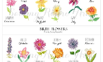 What is your birth month flower?