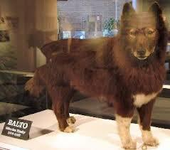 Should there be a Balto 4 or A tv show on Balto?