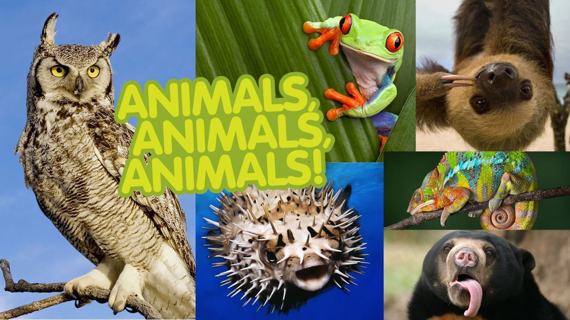 What animal is your favorite? (1)