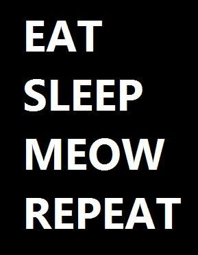 Eat Sleep Meow Repeat